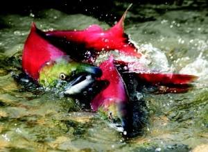Stormwater Runoff Pollution Prevention Aides Salmon